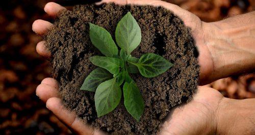 La poudre de thé vert matcha est riche en oligo éléments